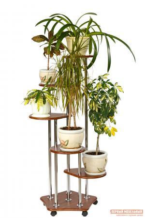 Цветочница  Подставка Пятерочка Орех Калифорния мебель. Цвет: коричневое дерево